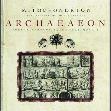 "MITOCHONDRION ""Archaeaeon"""